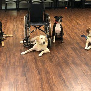 Dog Classes